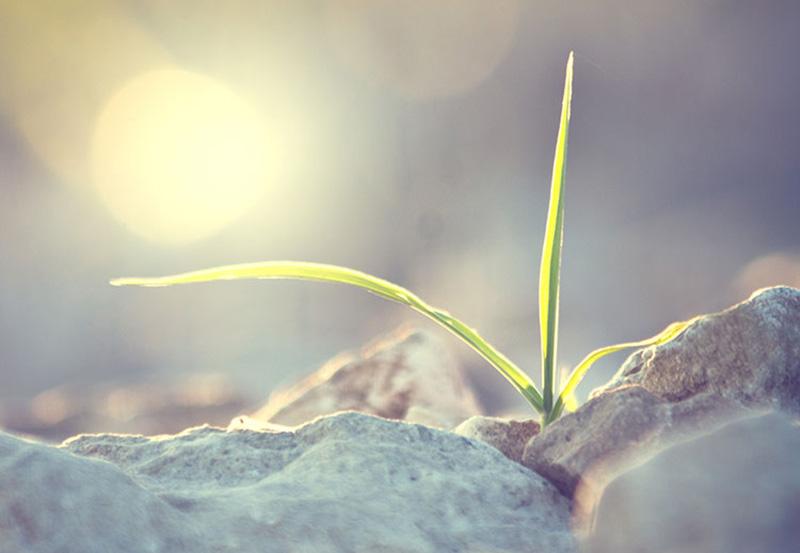 Vitaliteit en Duurzaame inzetbaarheid